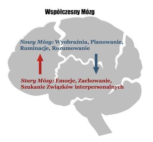 terapia-wspolczucia-compassion-stary-mozg-nowy-mozg  Terapia Współczucia: Stary Mózg-Nowy Mózg terapia wspolczucia compassion stary mozg nowy mozg
