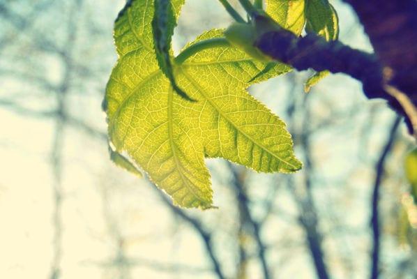 Uważność, Mindfulness, Inspiracja o poranku: Piękno natury, każdy dzień i każda chwila jako dar.
