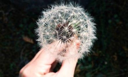 CFT: dlaczego współczucie