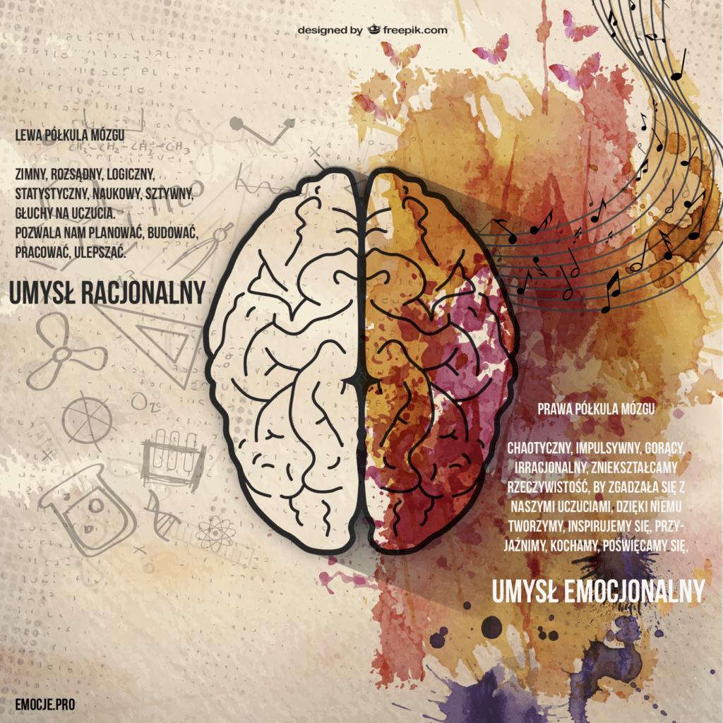 madry umysl praktyka oparta na dowodach naukowych Mądry Umysł i praktyka oparta na dowodach naukowych umysl racjonalny umysl emocjonalny prawy mozg lewy mozg 1024x1024